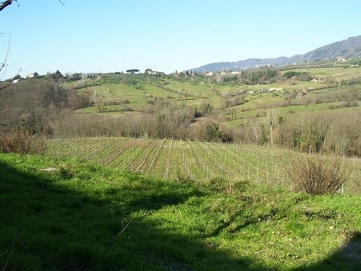 Agriturismo Lucca LU766